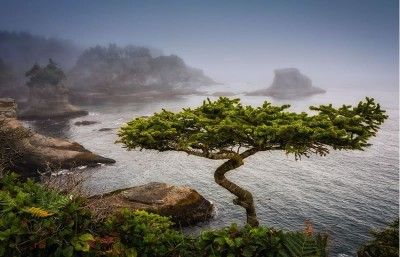 21 Amazing Bonsai Photos From Around The World
