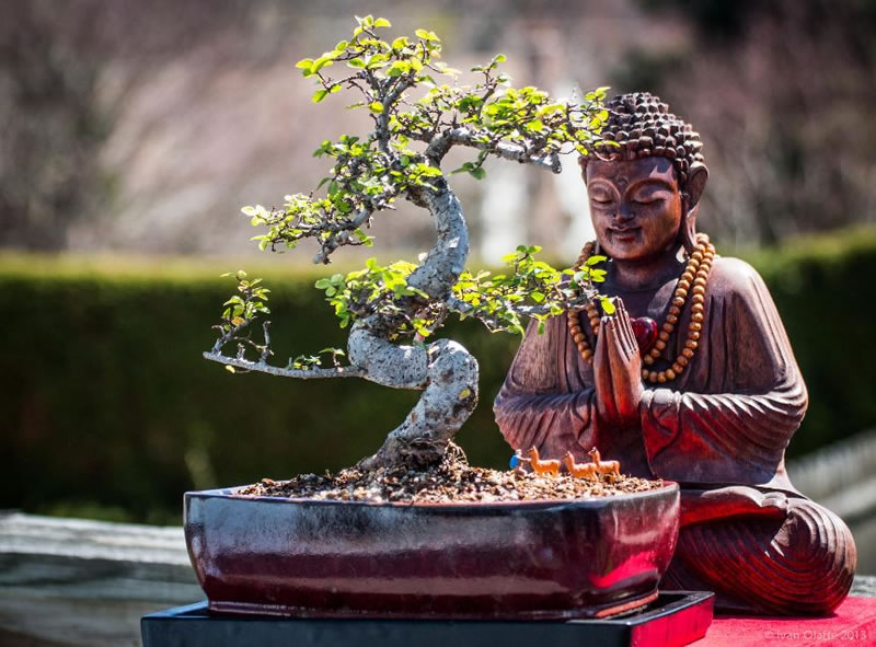 21 Amazing Bonsai Photos From Around The World (2)