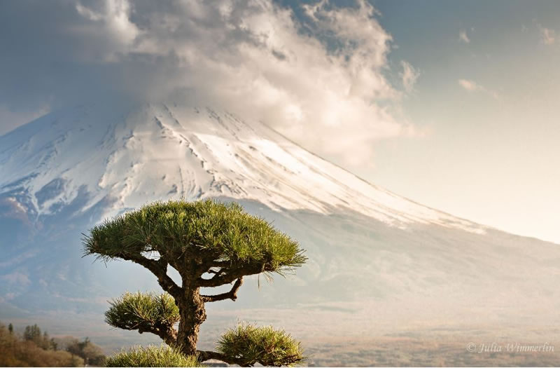 21 Amazing Bonsai Photos From Around The World (3)