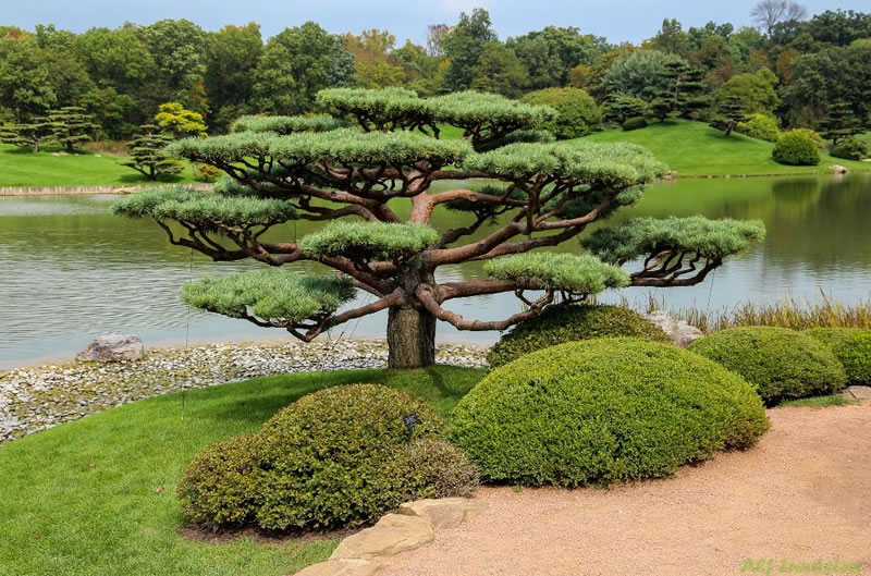 21 Amazing Bonsai Photos From Around The World (4)