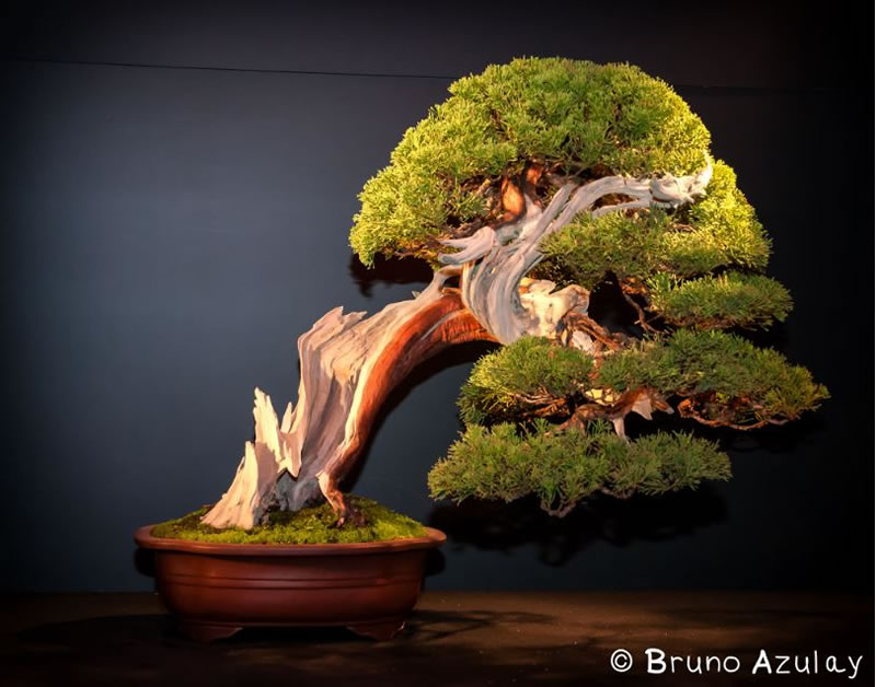 21 Amazing Bonsai Trees From Around The World (10)
