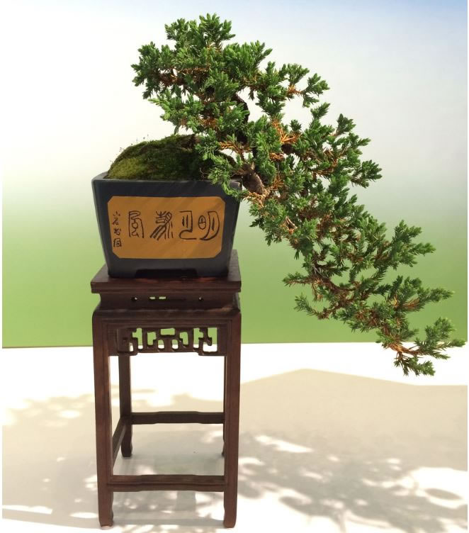 21 Amazing Bonsai Trees From Around The World (11)
