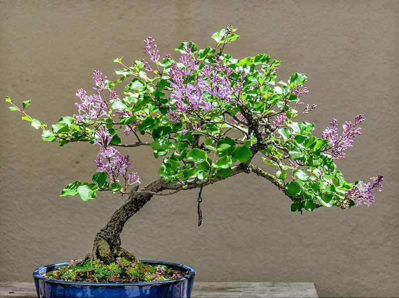 21 Amazing Bonsai Trees From Around The World (12)