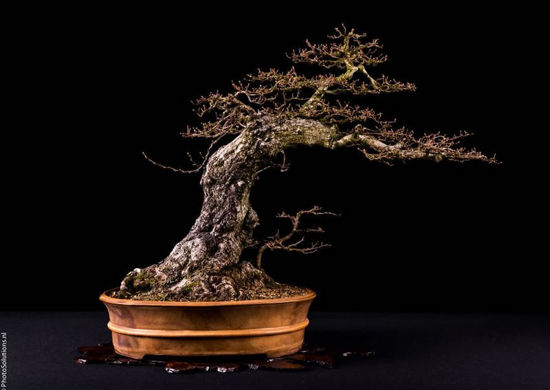21 Amazing Bonsai Trees From Around The World (13)