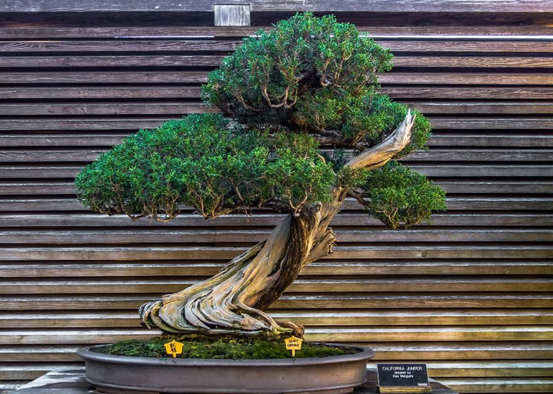 21 Amazing Bonsai Trees From Around The World (15)