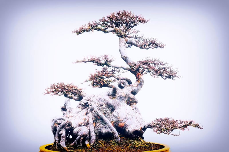 21 Amazing Bonsai Trees From Around The World (2)