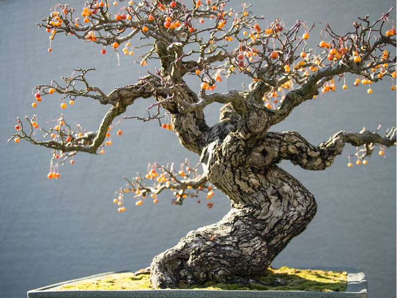 21 Amazing Bonsai Trees From Around The World (5)