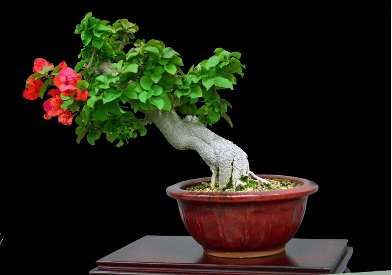21 Amazing Bonsai Trees From Around The World (6)