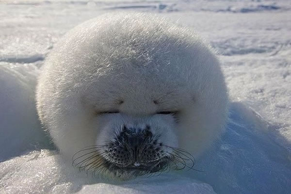 21 Cutest Fluffy Pets that will make your heart melt (13)