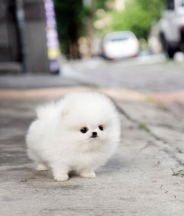 21 Cutest Fluffy Pets that will make your heart melt (15)