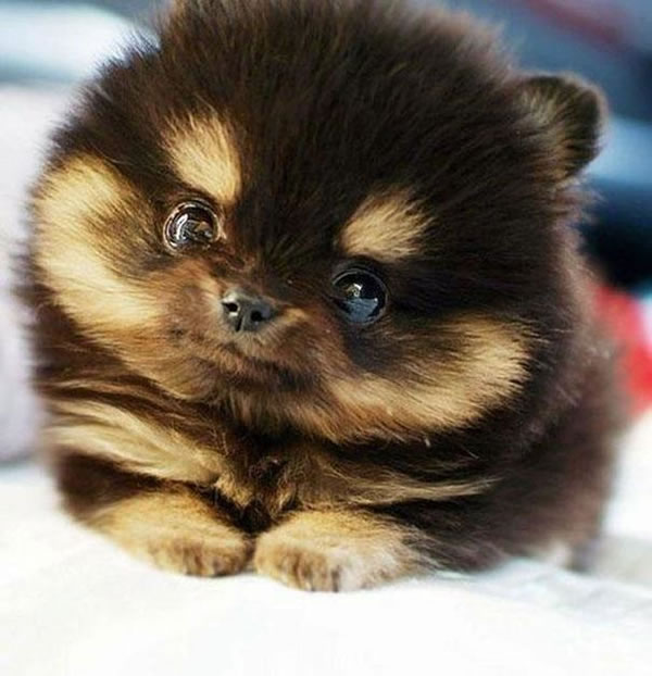 21 Cutest Fluffy Pets that will make your heart melt (4)