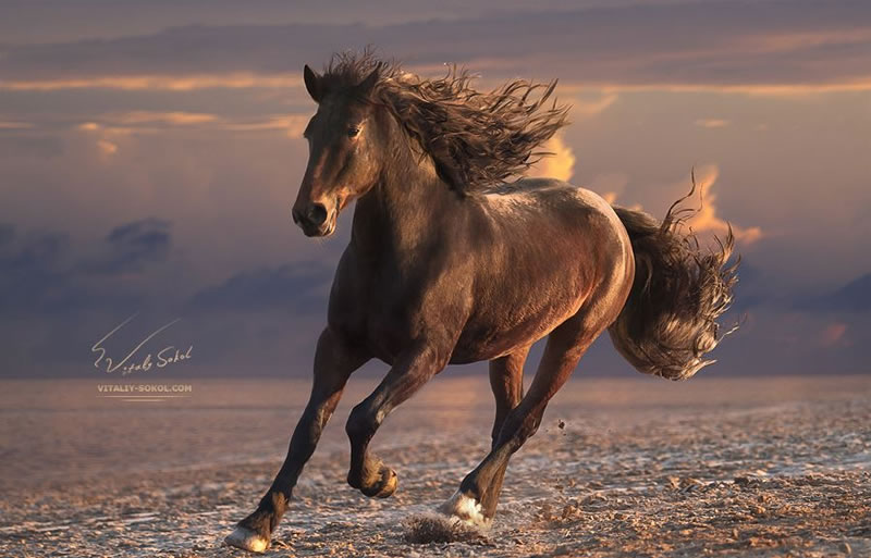 21 Running Horses Stock Photos To Take You Breath Away (1)