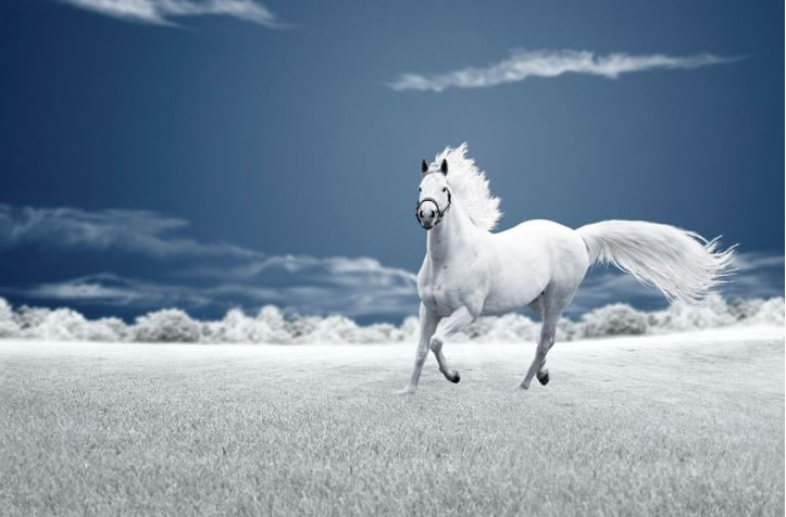 21 Running Horses Stock Photos To Take You Breath Away (11)