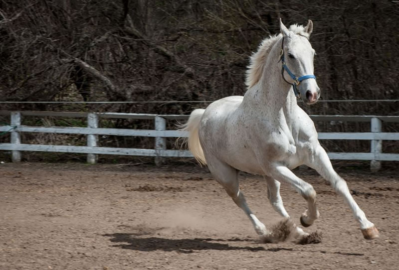 21 Running Horses Stock Photos To Take You Breath Away (12)