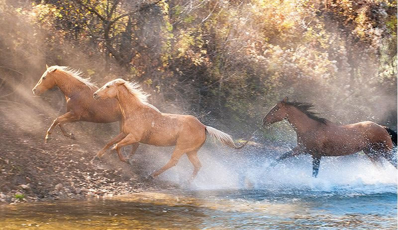 21 Running Horses Stock Photos To Take You Breath Away (13)