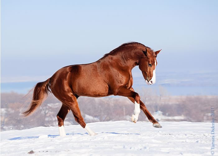 21 Running Horses Stock Photos To Take You Breath Away (14)