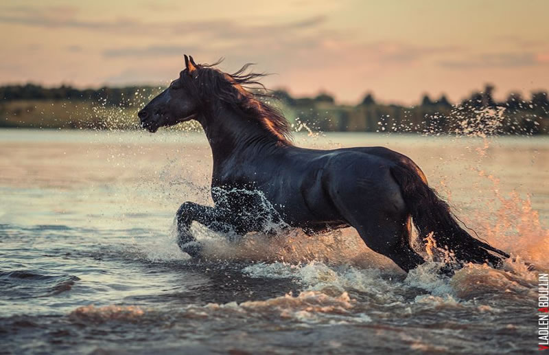 21 Running Horses Stock Photos To Take You Breath Away (15)