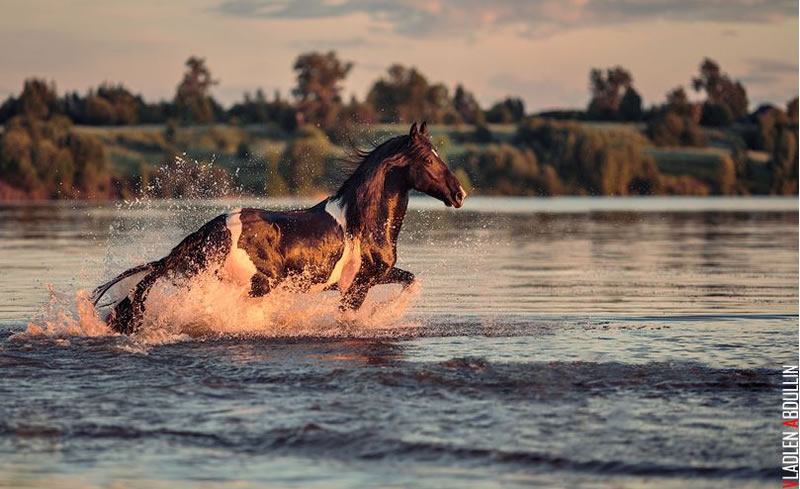 21 Running Horses Stock Photos To Take You Breath Away (16)