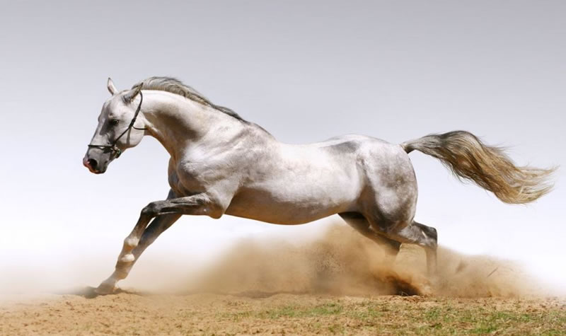 21 Running Horses Stock Photos To Take You Breath Away (2)