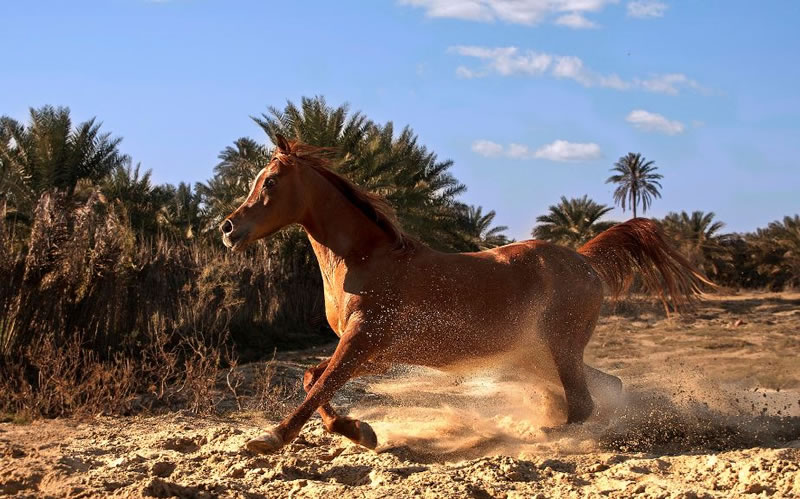 21 Running Horses Stock Photos To Take You Breath Away (3)