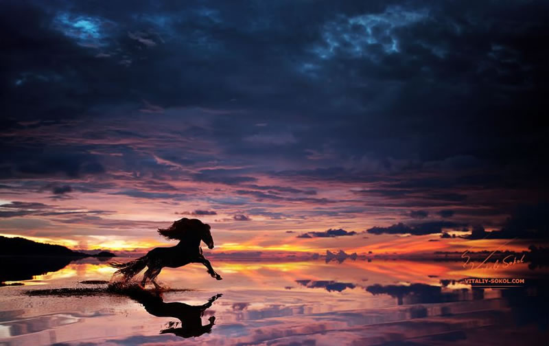 21 Running Horses Stock Photos To Take You Breath Away (4)