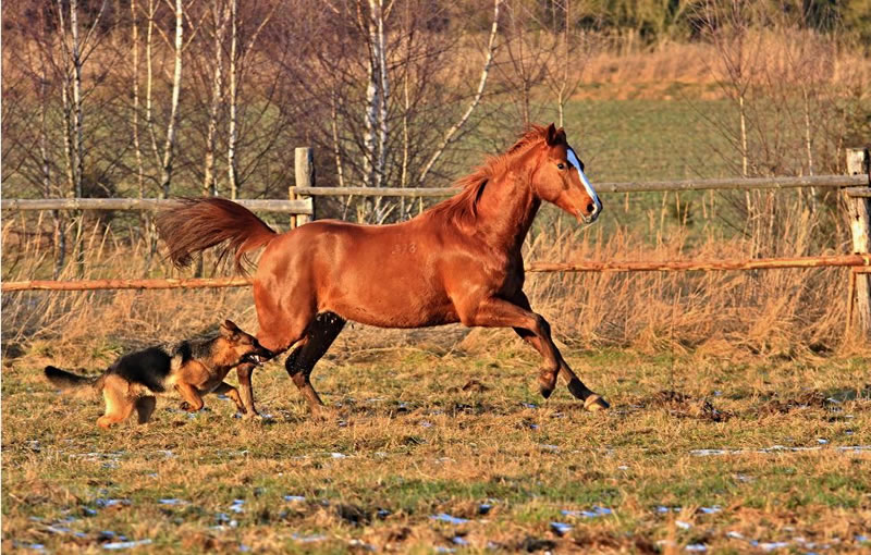 21 Running Horses Stock Photos To Take You Breath Away (5)