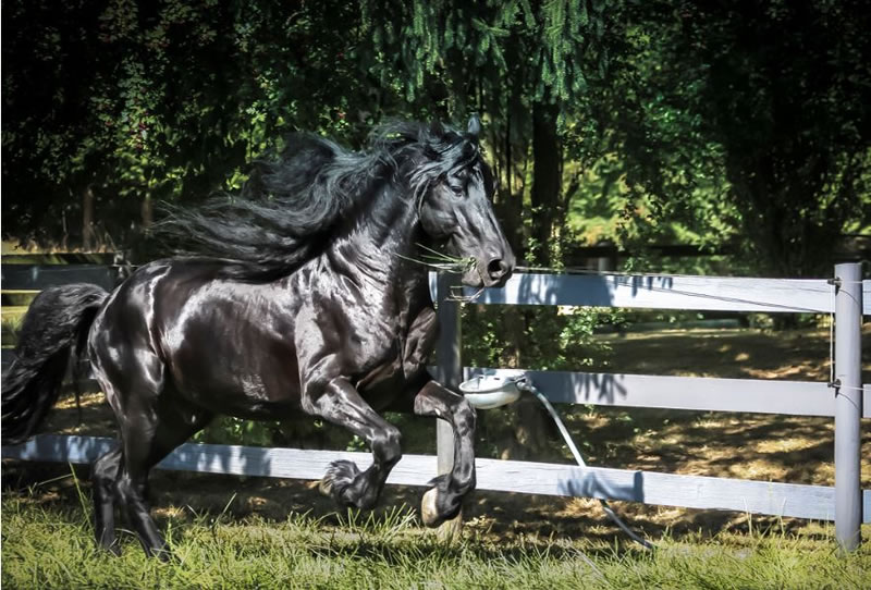 21 Running Horses Stock Photos To Take You Breath Away (6)