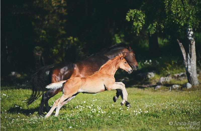 21 Running Horses Stock Photos To Take You Breath Away (7)