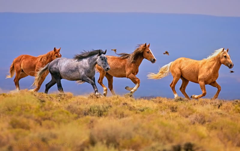 21 Running Horses Stock Photos To Take You Breath Away (8)