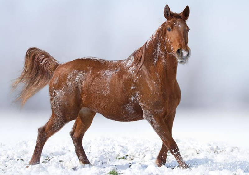 21 Running Horses Stock Photos To Take You Breath Away (9)