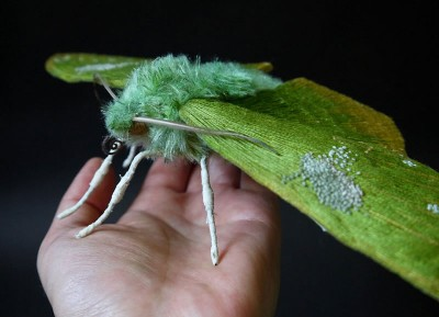 Custom Embroidery Amazing Giant Moths And Butterflies
