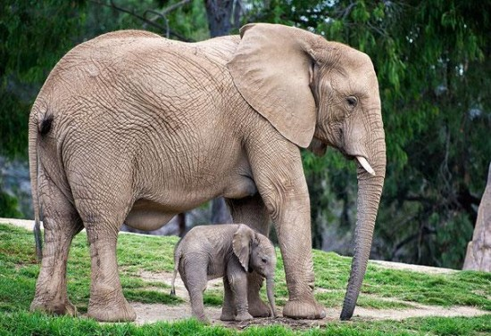 Cutest Animal Photos With Their Mini-Me Counterparts (2)