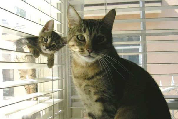 Cutest Animal Photos With Their Mini-Me Counterparts (5)