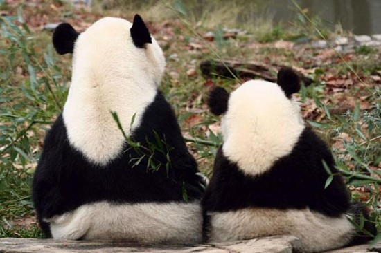 Cutest creatures Photos With Their Mini-Me Counterparts (11)