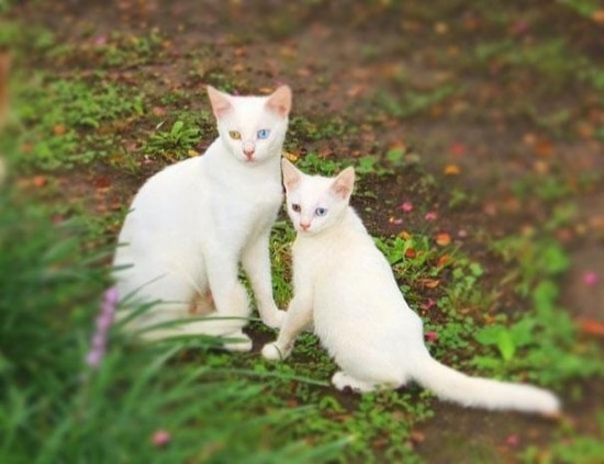 Cutest creatures Photos With Their Mini-Me Counterparts (13)
