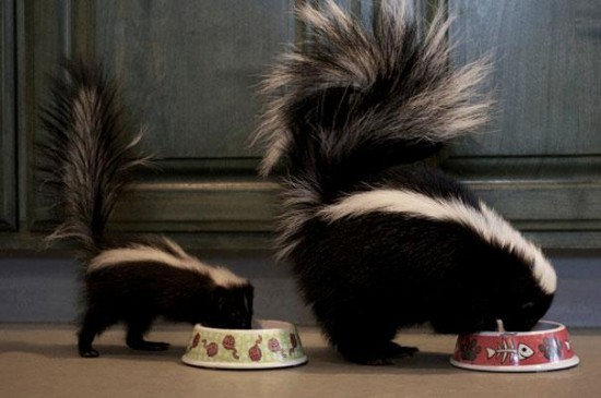 Cutest creatures Photos With Their Mini-Me Counterparts (3)