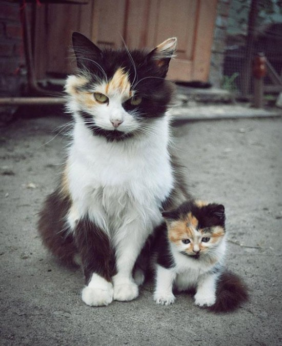 Cutest creatures Photos With Their Mini-Me Counterparts (4)