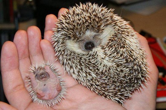 Cutest creatures Photos With Their Mini-Me Counterparts (5)
