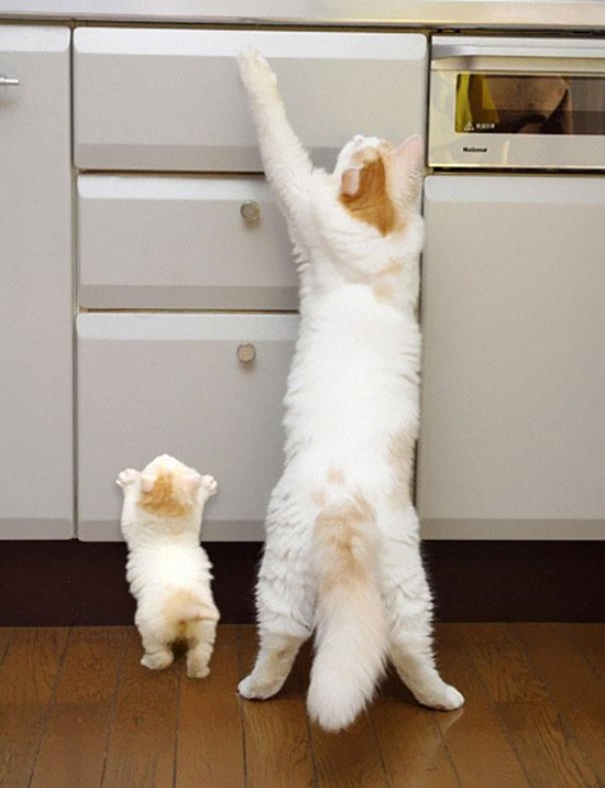 Cutest creatures Photos With Their Mini-Me Counterparts (7)