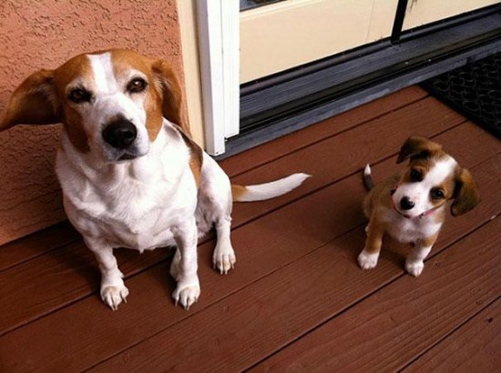 Cutest creatures Photos With Their Mini-Me Counterparts (9)