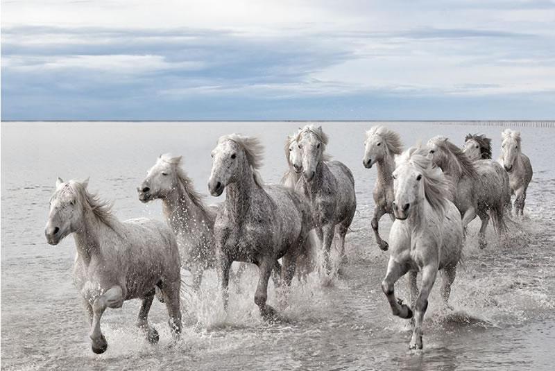 Horse Stock Photos (1)