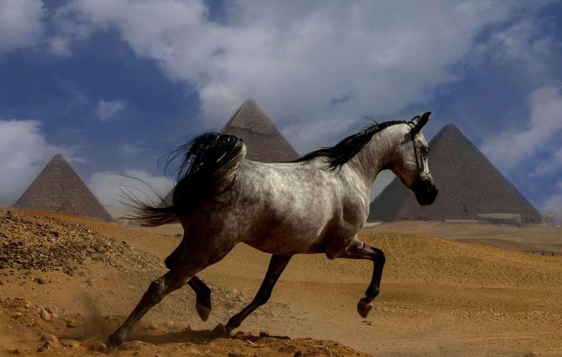 Horse Stock Photos (2)