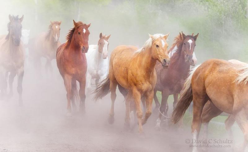Horse Stock Photos (4)