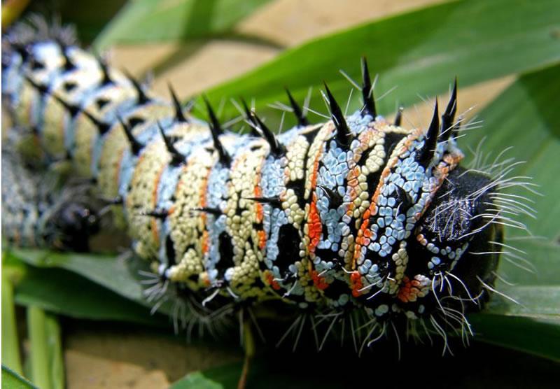 Macro Photography Amazing Miniature World Of Insects (1)