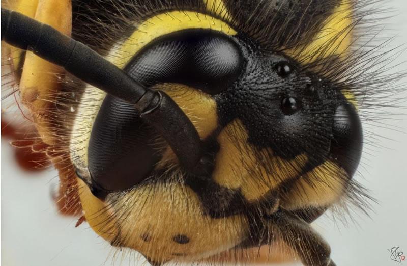 Macro Photography Amazing Miniature World Of Insects (4)