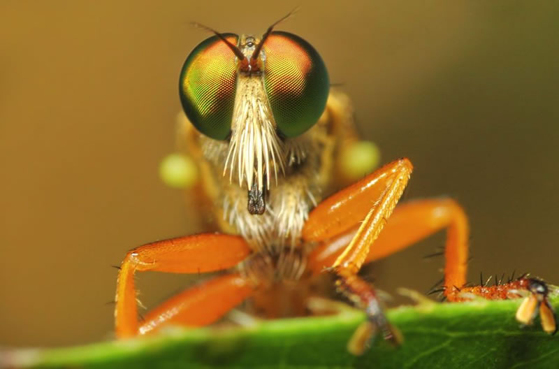 Macro Photos highly detailed Amazing Miniature World Of Insects (3)