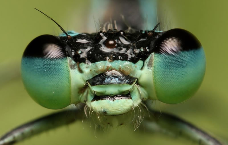 Macro Photos highly detailed Amazing Miniature World Of Insects (9)