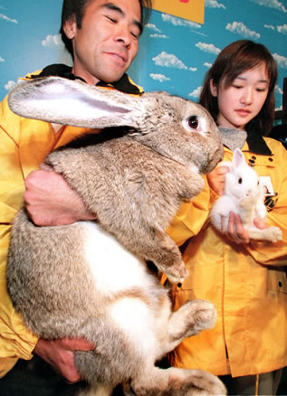 Out Of Control Nature Photos Of 25 Real Life Enormous Rabbits (14)
