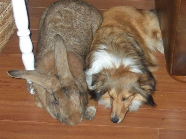 Out Of Control Nature Photos Of 25 Real Life Giant Rabbits (2)