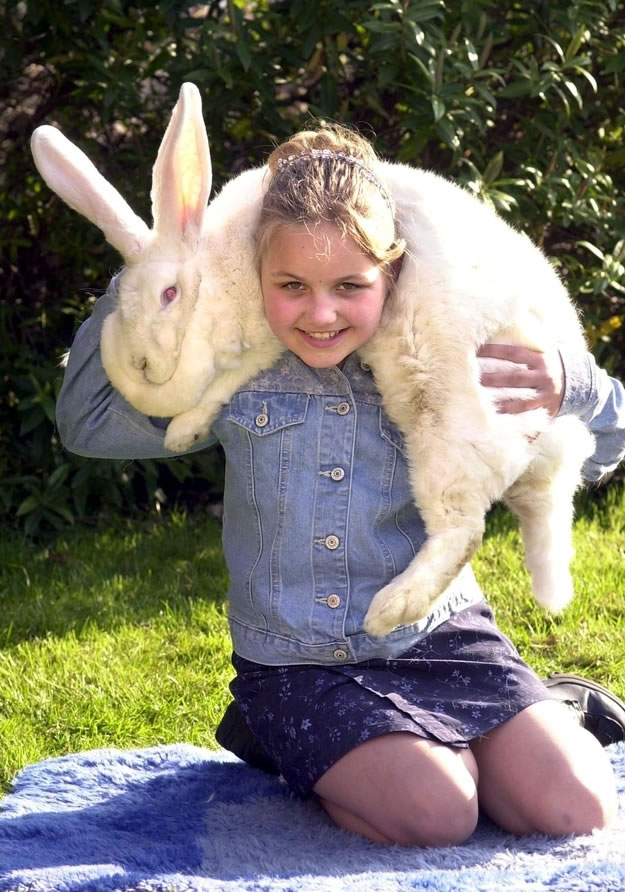 Out Of Control Nature Photos Of 25 Real Life Giant Rabbits (3)